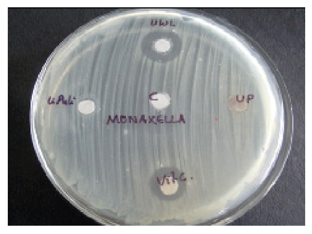 Effect of Moraxella catarrhalis on different citrus fruits