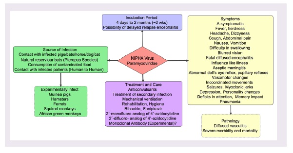 A pictogram of Nipah virus infection and treatment.