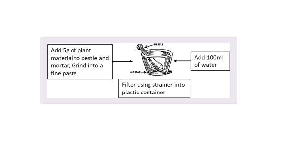 Preparation of the Plant Extract.